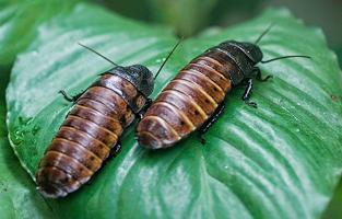 insectarium example