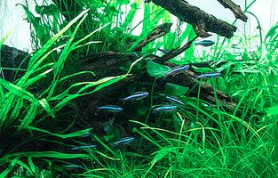 underwater paludarium