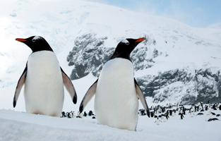 penguin enclosure at zoo