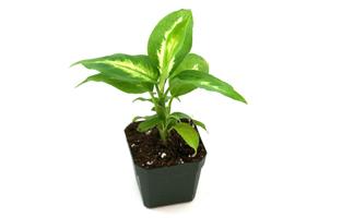 vivarium plants for sale