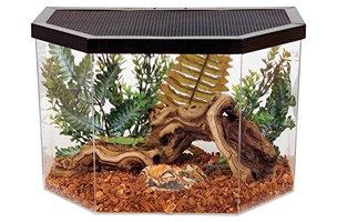 how to set up terrarium for phyton