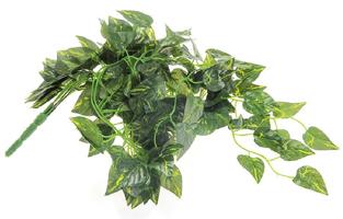 plants for a chameleon vivarium